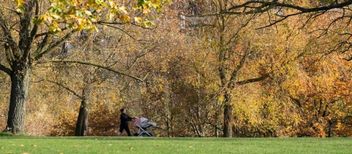A stroll over Hamstead Heath